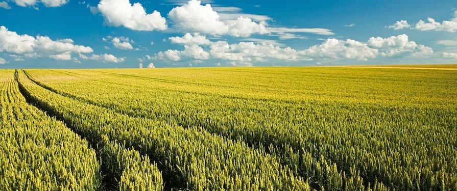 Risultati fertilizzanti Valagro per agricoltura