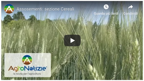 Assoementi: sezione Cereali - Video