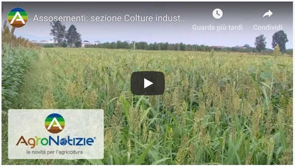 Assosementi - sezione Colture Industriali - video
