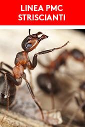 Linea PMC insetti striscianti Kollant