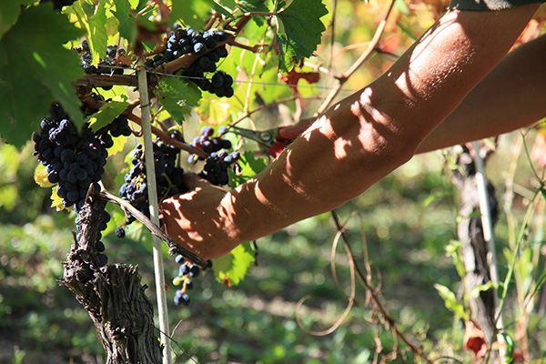 Vino Libero - il modello di agricoltura - fonte VinoLibero.it