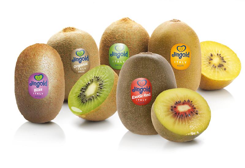 varietà kiwi jingold